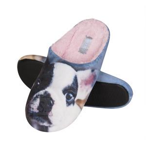 Koera pildiga sussid